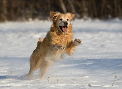 http://pixdaus.com/fun-in-the-snow-animals-by-sabine-hempel-dog/items/view/271612/