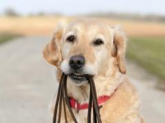 http://petlawblog.wordpress.com/2011/03/27/do-i-have-to-keep-my-dog-on-leash/