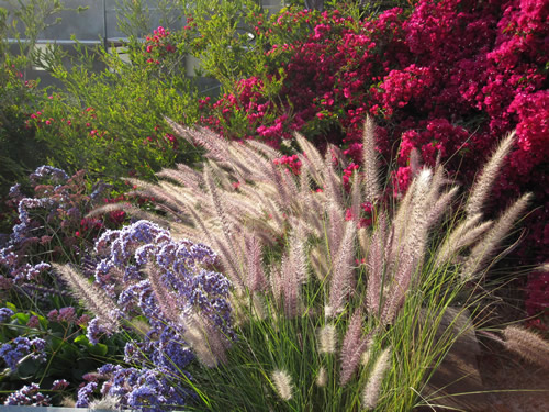 15 ways to conserve water ftedailygreen for Low water landscaping plants